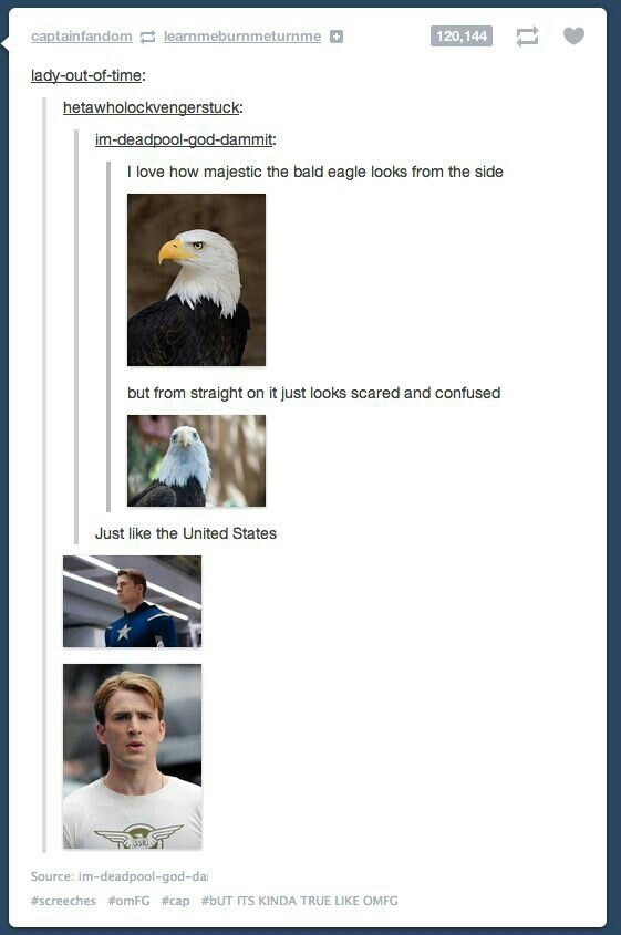 Ah the majestic Chris Evans . . . . I mean Bald Eagle (or do I)