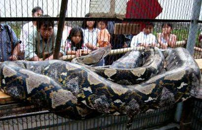 New: The World's Biggest Snakes