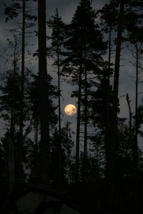 "heyfiki: ""Forest Moon """