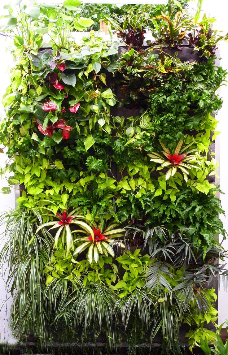 Plants On Walls wonderfull vertical garden plans with red flowers