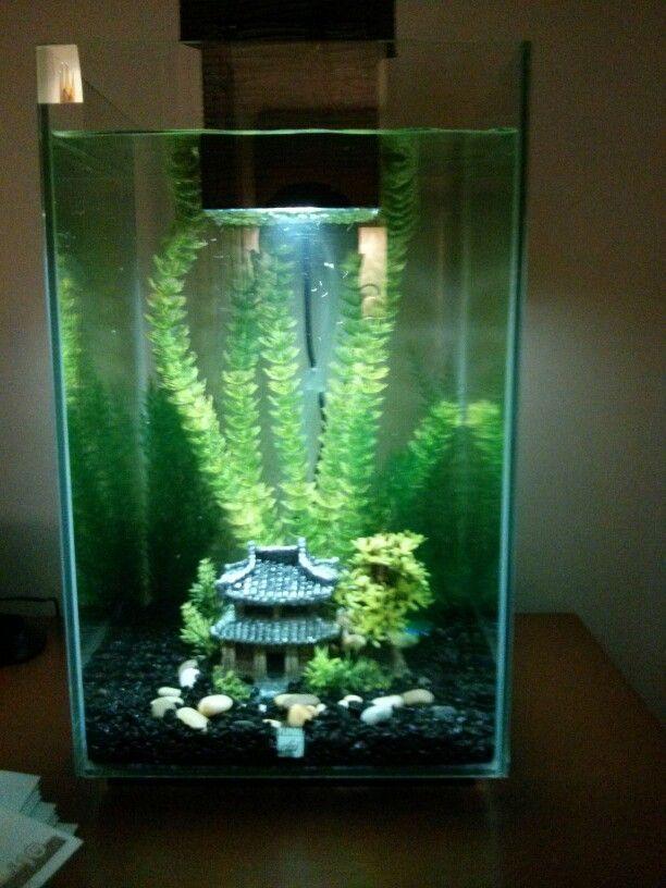 My 25 ltr fluval chi set up aquarium decoration pinterest for Aquarium decoration set