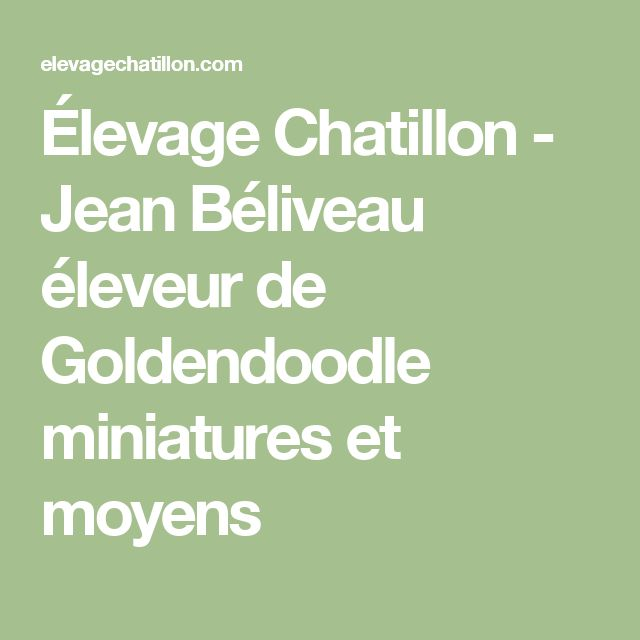 Élevage Chatillon - Jean Béliveau éleveur de Goldendoodle miniatures et moyens