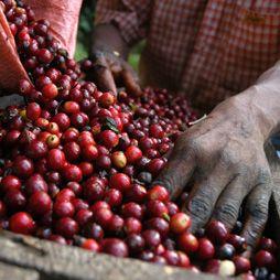 Tremendous Extract coffee served at Razzo :-)