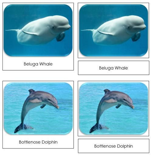 Whales and Dolphins Safari Toob Cards - printable cards by Montessori Print Shop