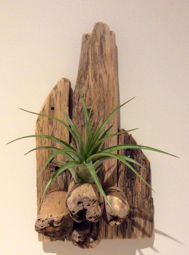 Pièce en bois flotté agrémentée d'un Tillandsia par l'Atelier de Cor…