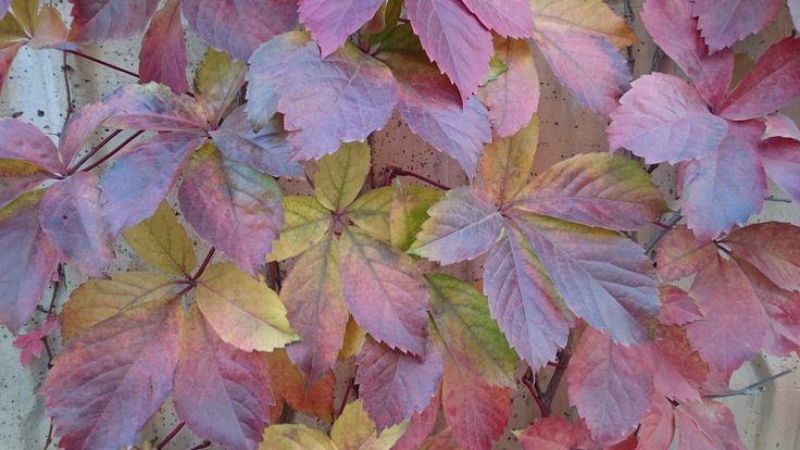 Sonbahar yeniden... Fall all over again....