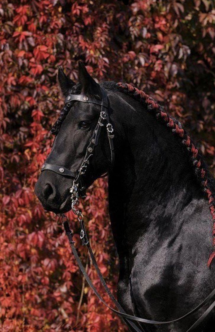 лошади в картинках розы качестве связывающих