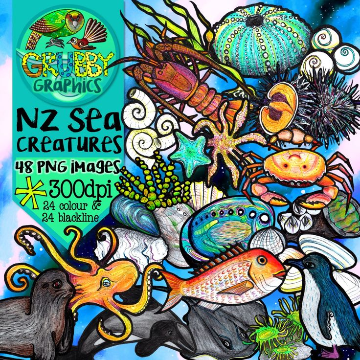 Exploring the good old Kiwi 'rock pool' unit or taking your learning to the beach? Then this is the perfect clip art set for you! This selection contains some of the fascinating creatures and plants that are commonly found in New Zealand's waters and on our beaches. This set contains 48 images (24 colour and 24 blackline) as high quality (300 dpi) PNGs with transparent backgrounds.