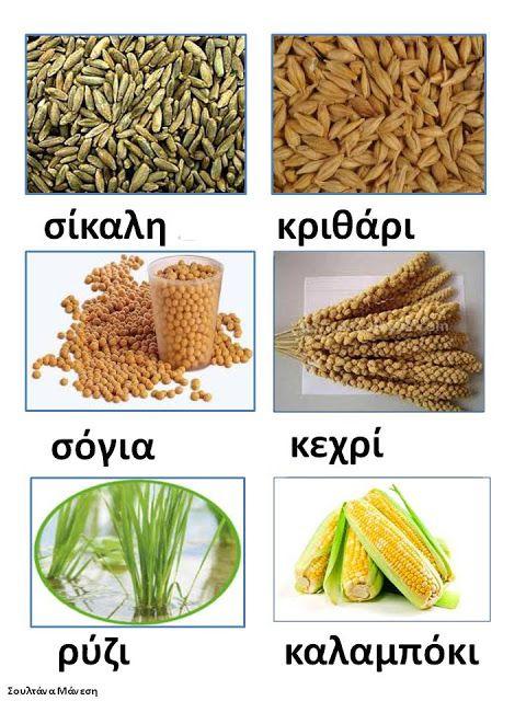 Δραστηριότητες, παιδαγωγικό και εποπτικό υλικό για το Νηπιαγωγείο: Πίνακας Αναφοράς για τα δημητριακά στο Νηπιαγωγείο