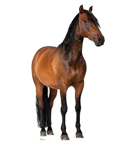 Horse - Advanced Graphics Life Size Cardboard Standup Advanced Graphics http://www.amazon.com/dp/B00B0AV9YK/ref=cm_sw_r_pi_dp_2Gs7ub0Z8B8F6