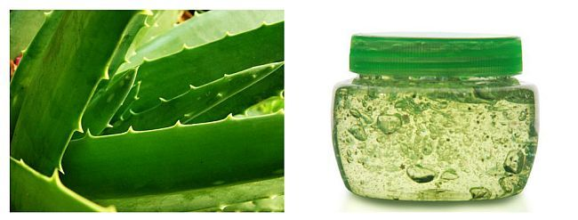 Între gelul din interior și coaja frunzei există un strat de sevă galbenă, numită aloină. Aceasta are un miros neplăcut, are un efect laxativ și poate fi iritantă pentru piele. Pentru a-l îndepărta, puneți frunzele de aloe în picioare într-un pahar înalt și lăsați-le să stea câteva minute, până se scurge tot lichidul galben din ele.