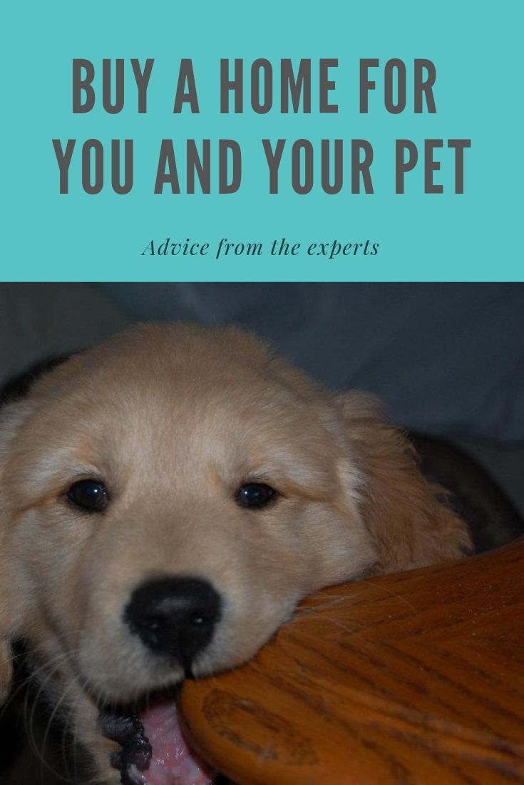 The Pet Lover S Guide To Buying A Home 6 Things You Might Miss Home Buying Pets Pet Advice