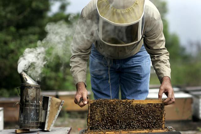 5 Places to Buy Honey Bees Online: Draper's Super Bee Apiaries Inc.