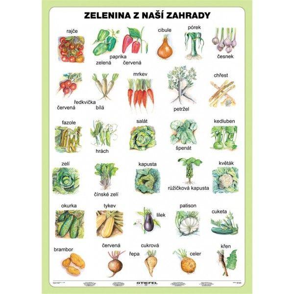 Zelenina z naší zahrady