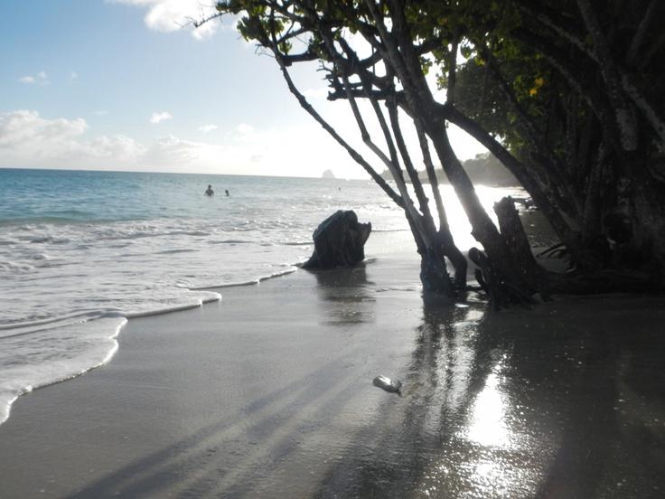 Anse Banane (quand la mangrove prend pied sur la plage)