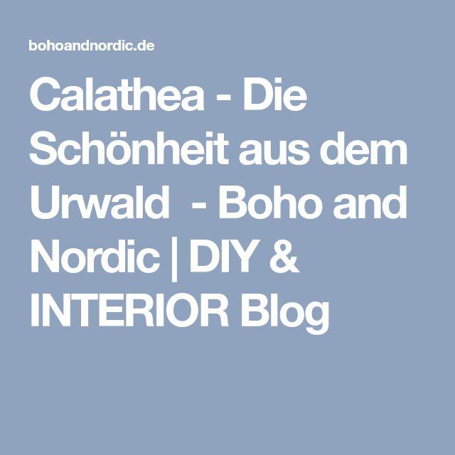 Calathea - Die Schönheit aus dem Urwald - Boho and Nordic | DIY & INTERIOR Blog