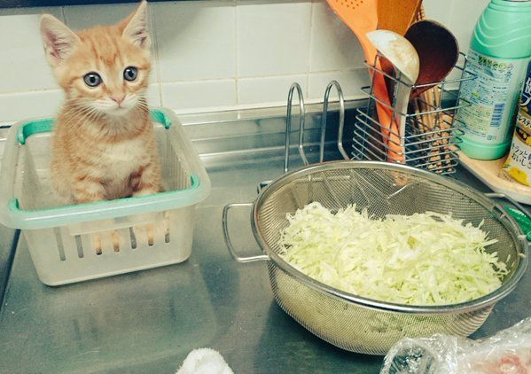 キッチン行ったらママンが夕飯作ってる脇でおとなしく見学しててワロタ - ツイナビ | ツイッター(Twitter)ガイド