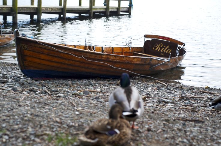 Ducks and a rowing boat at Waterhead, Ambleside