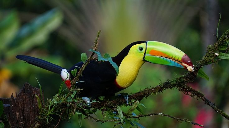 Explore exciting Costa Rica on film at www.capturednation.com