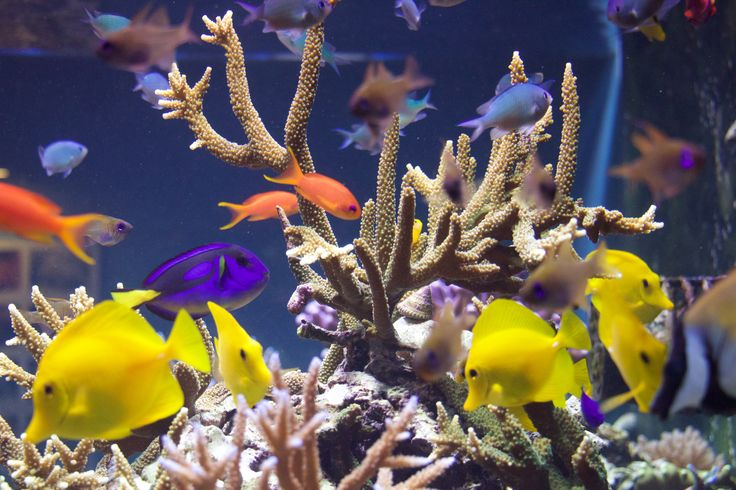 Coral Reefs: Secret Cities of the Sea. Natural History Museum, London 2015. Horniman Museum's aquarium display. #CoralReefs