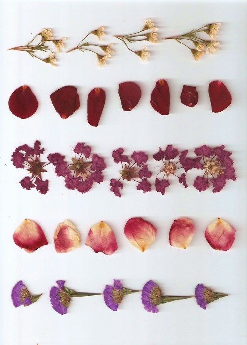 Pressed flora and fauna from visited places
