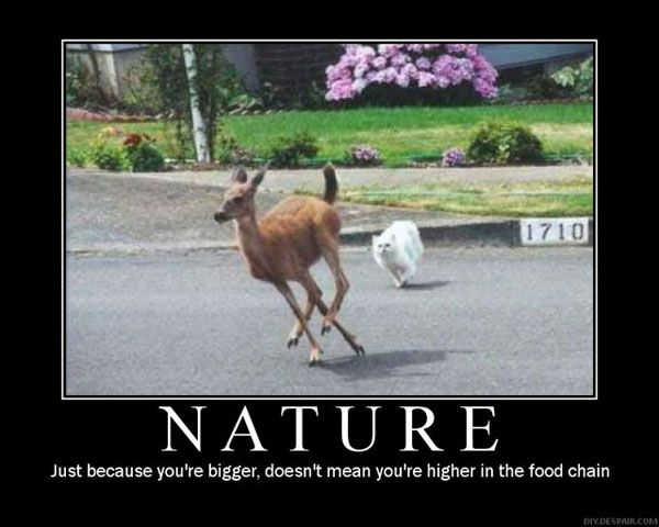 ced0c48423f1c83b81c7ed1cf83c2d2f funny deer funny cats 16 best stupid animals!!! images on pinterest funny photos, funny