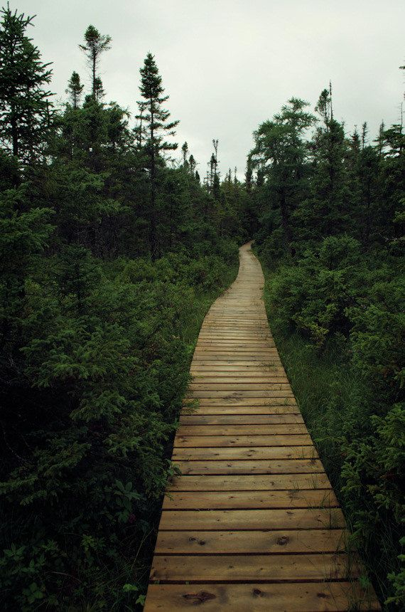 """Large Scale Landscape Print of Wild Forest Travel Photograph - Boreal - 42""""x63"""""""