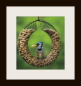 case per uccelli fatte con le molle