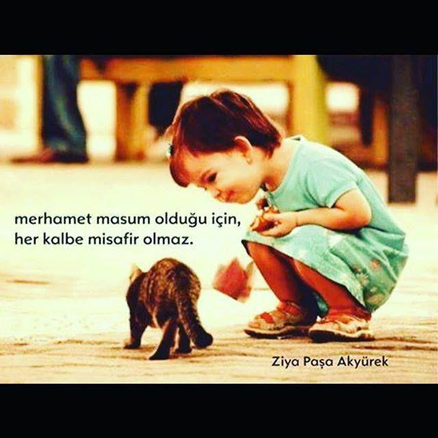 Tünaydın #empatisev #merhamet Merhamet masum olduğu için her kalbe misafir olmaz.  Ziya Paşa Akyürek