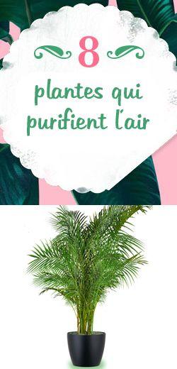 61 best les plantes intérieures images on Pinterest Gardening
