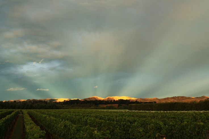 The heavens open up.  Shot by Helena Maria Mantel, 30th January 2014 at Harvest Estate St Martin Vineyard in Martinborough, New Zealand.
