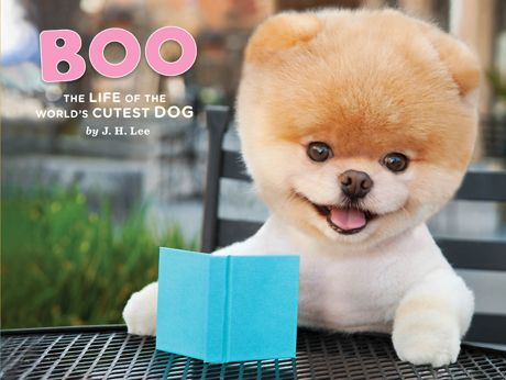 THE cutest dog in the world Boo, is published :)