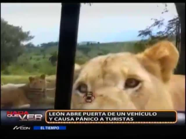 Leona Abre Puerta De Carro Y Aterra A Sus Pasajeros #Video