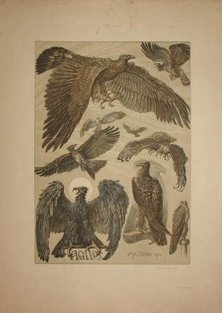 Art Nouveau Eagles by Anton Seder from Das Thier in der Decorativen Kunst, Vienna: 1896-1909, a sourcebook intended to provide inspiration for designers of fabrics, wallpaper, ceramics, book illustrations, posters and advertisements.