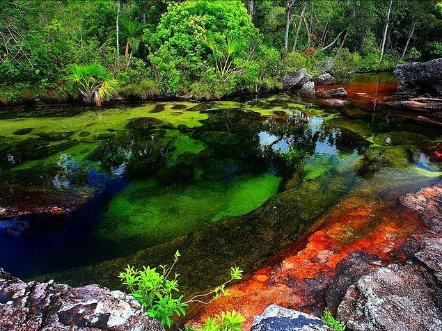 Kolombiya'da bulunan Caño Cristales, farklı hava koşulları altında kırmızı, mavi, sarı ve turuncu renklere bürünen bir su bitkisi ile kaplı. Yılın büyük bölümünde herhangi bir nehir gibi görünen Caño Cristales, Haziran'dan Aralık'a kadar bir gökkuşağını andırıyor.