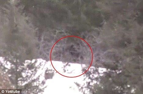 Is that you, Bigfoot? Grainy footage shot by one of the students shows a