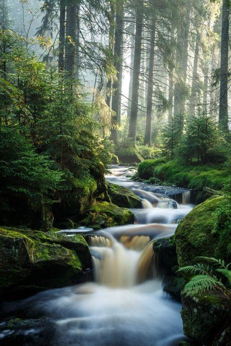 Nebelhafter Morgen —- Forest Creek-Baumlandschaftsnaturwasserfall