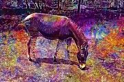 "New artwork for sale! - "" Zonkey Zebra Donkey Stripes Mammal  by PixBreak Art "" - http://ift.tt/2eOTNrL"
