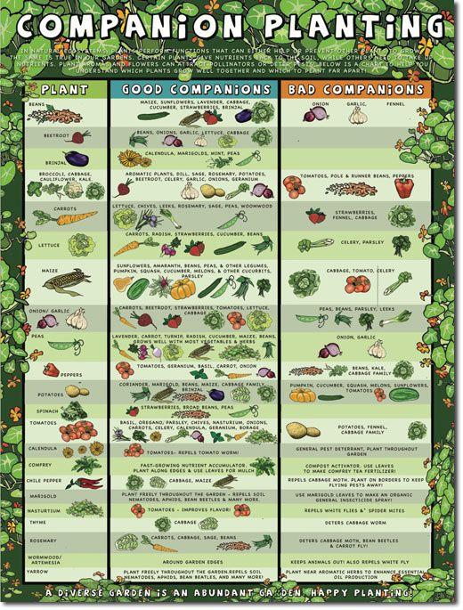 44 best willard neighborhood org images on Pinterest | Vegetable ...