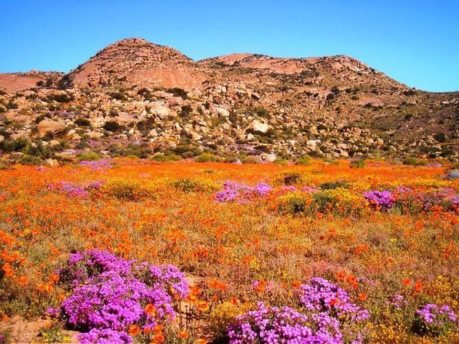 115 besten Flora Bilder auf Pinterest | Exotische blumen ...