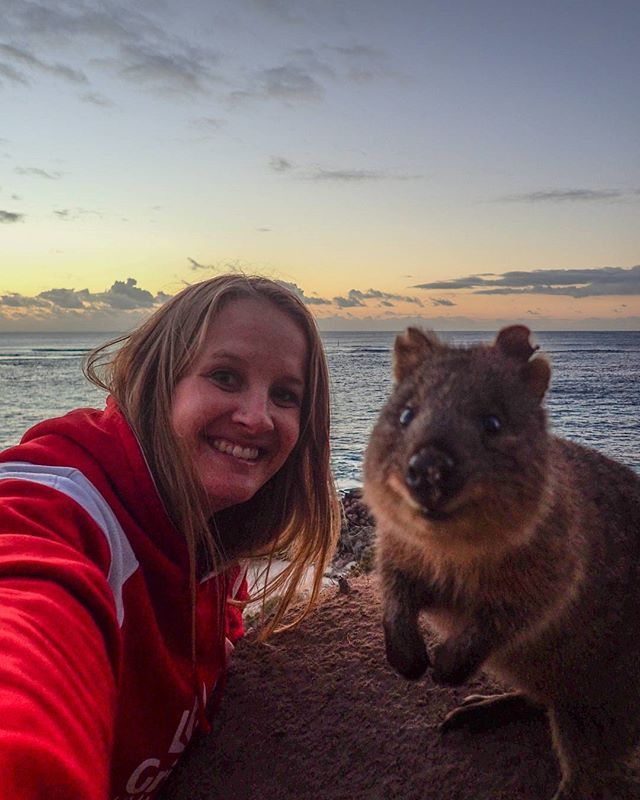 AAGGGGHHH!! How cute is this little guy! I love it that he popped up at sunset - my favourite time of day! Perfect smile, perfect backdrop 🐻  eeeeeek! So Happy 🐻  #quokkaselfie #dreamcometrue #travelintoliving #rottnestisland #thisisWA