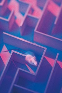Mice, mazes, and MUSIC