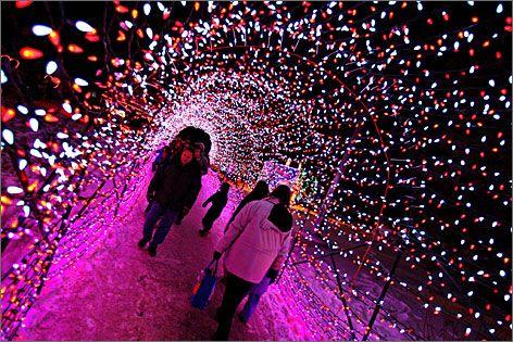Calgary Zoo Lights