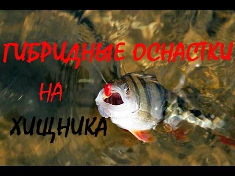 Ловля окуня на гибридные приманки. Catching perch on hybrid bait - YouTube