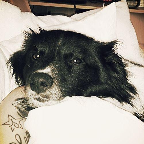 """Spitz Münsterländer Djego """"Ich kuschel einfach gerne!"""" #Hund: Djego / Rasse: #Spitz Münsterländer      Mehr Fotos: https://magazin.dogs-2-love.com/foto/spitz-muensterlaender-djego/ Foto, Hund, Liebe"""