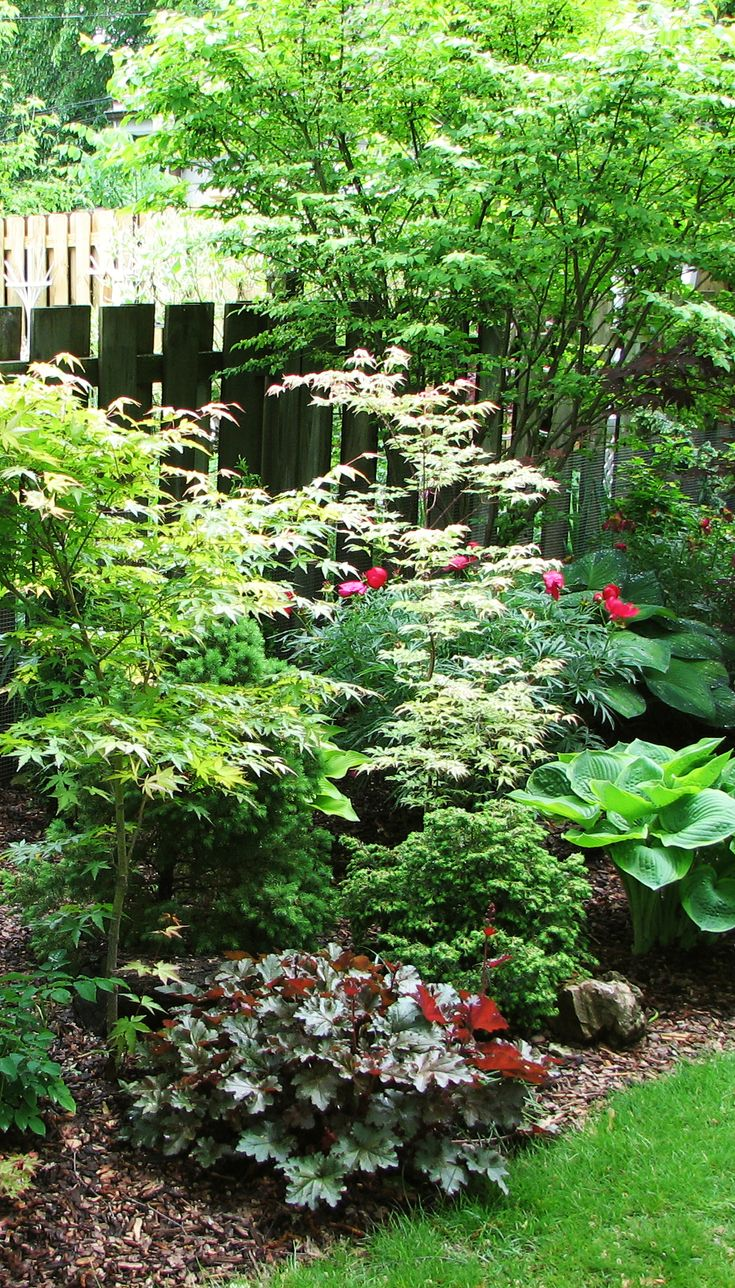 Japanese maples hosta heuchera evergreen shrubs for Garden inspiration