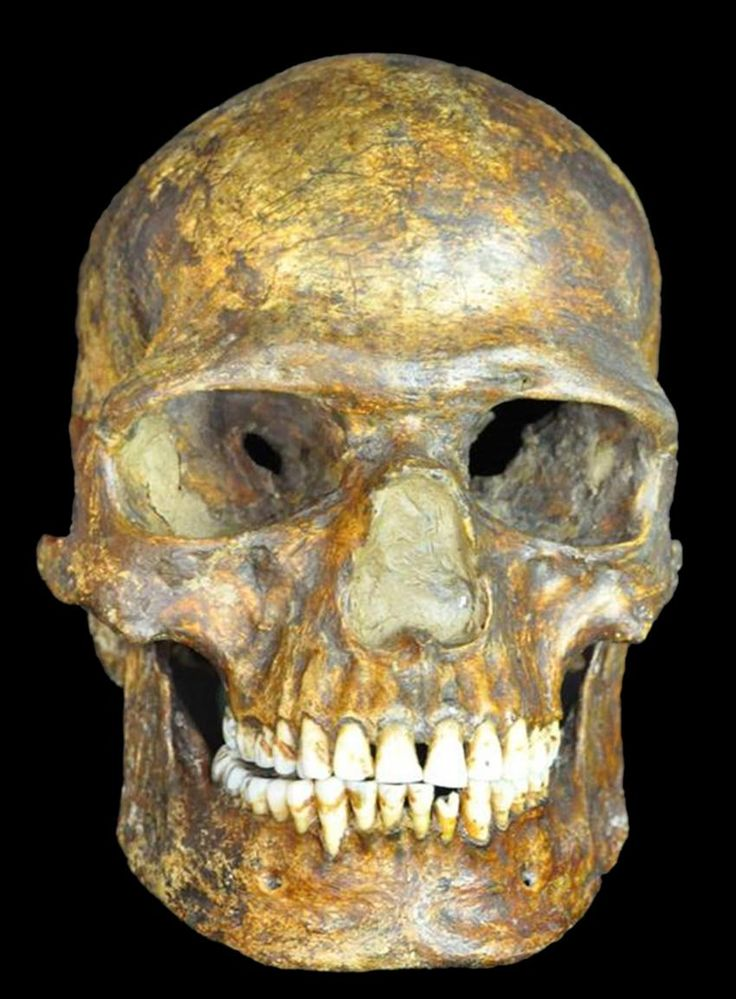 #HumanMigration A ground-breaking new study on DNA recovered from a fossil of one of the earliest known Europeans - a man who lived 36,000 years ago in Kostenki, western Russia - has shown that the earliest European humans' genetic ancestry survived the Last Glacial Maximum: the peak point of the last ice age.