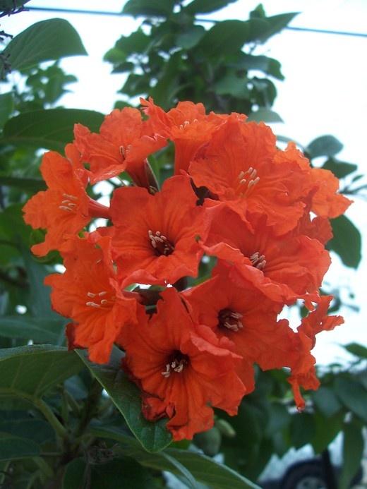 1292 best flowers images on pinterest