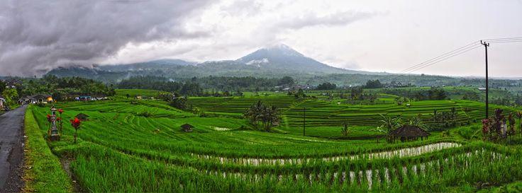 Pariwisata Bali: Jatiluwih Desa Wisata Penuh Pesona
