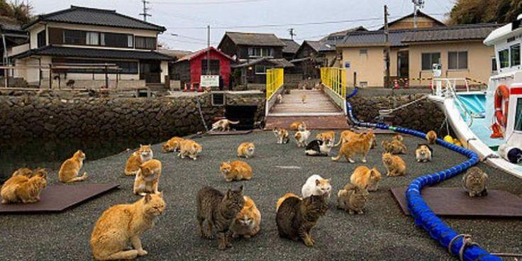 ulau Aoshima di prefektur Miyazaki, Jepang, hanya dihuni 20 orang penduduk, tetapi jumlah kucing di pulau ini mencapai 120 ekor atau enam kali lipat lebih banyak. Kucing pertama kali masuk ke pulau kecil itu untuk mengimbangi wabah tikus yang merusak perahu-perahu para nelayan. Setelah itu, kucing-kucing itu beranak pinak hingga mencapai jumlah saat ini. Tanda-tanda…